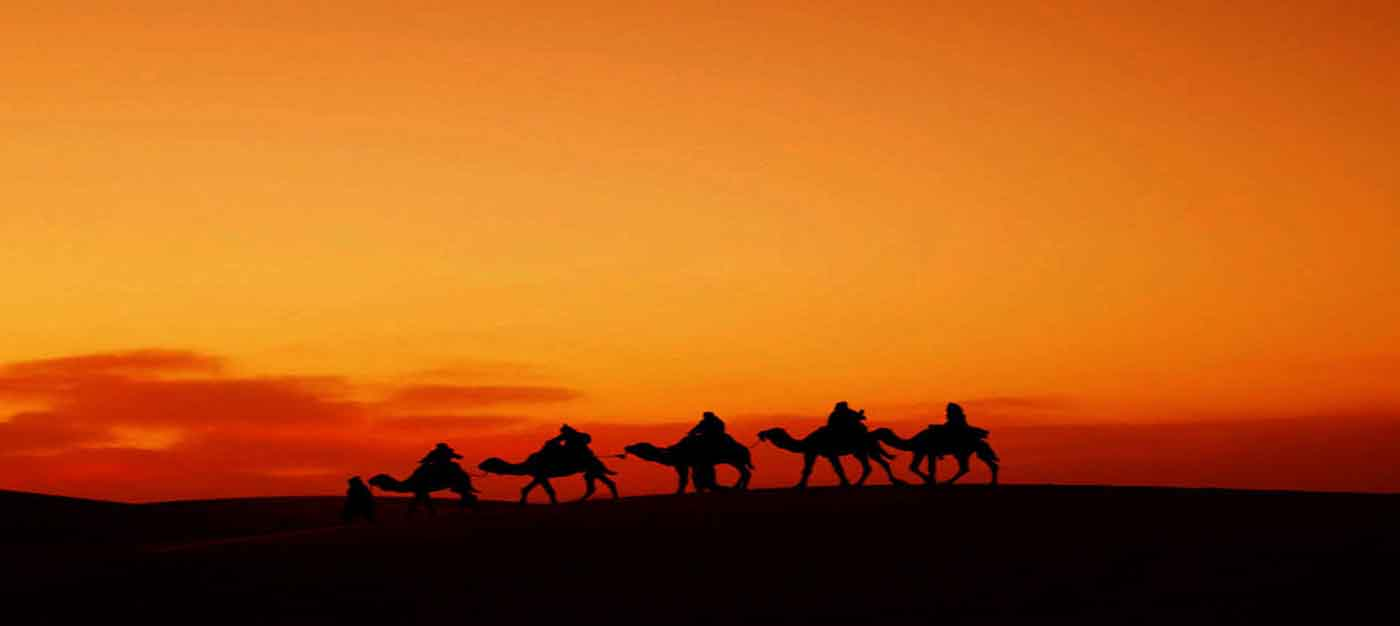 camel trek sunset