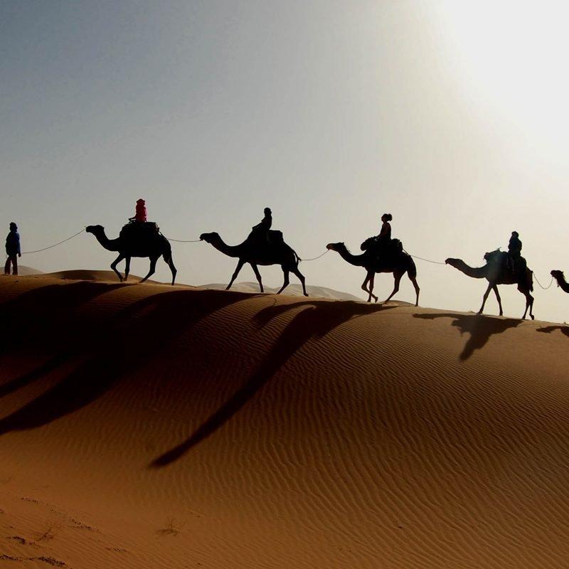 camel trek from marrakech to zagora