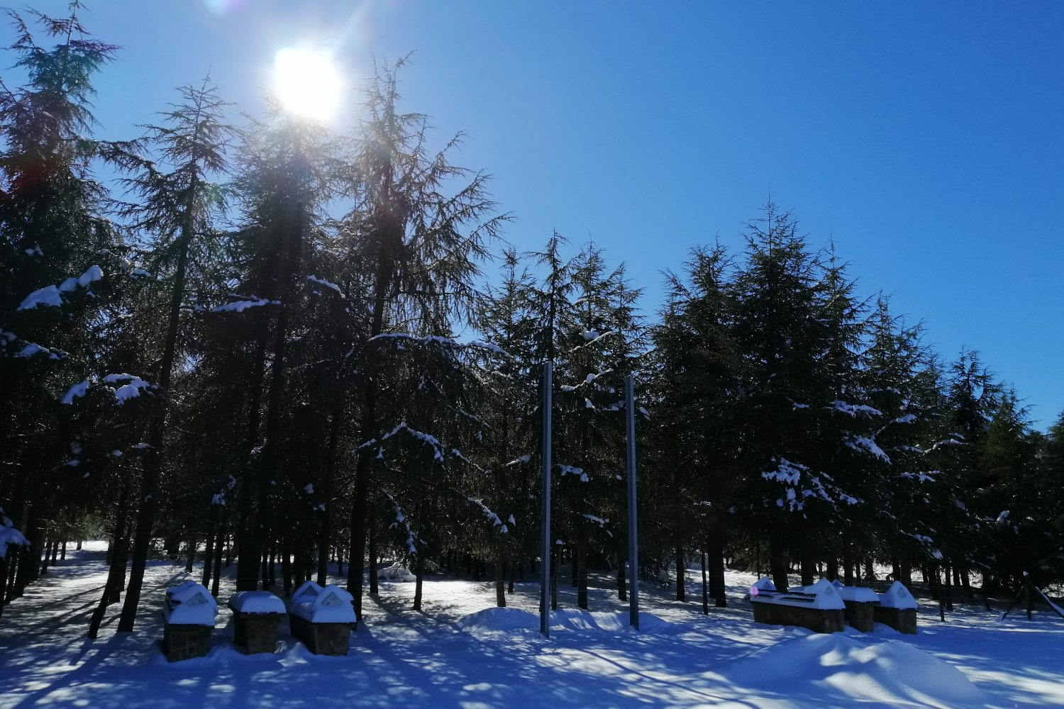 cedar forest morocco tours ifran
