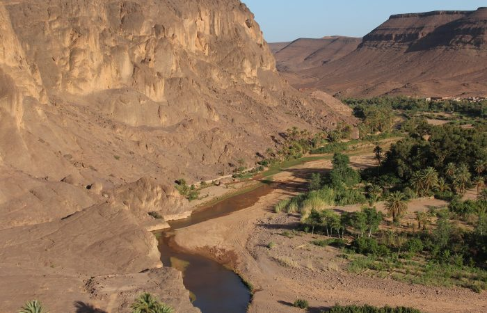 day trip from ouarzazate to fint oasis